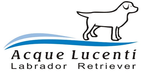 Acque Lucenti – Labrador Retriever